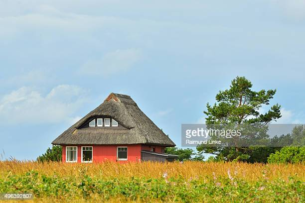 house with reed roof - mecklenburg vorpommern stock pictures, royalty-free photos & images