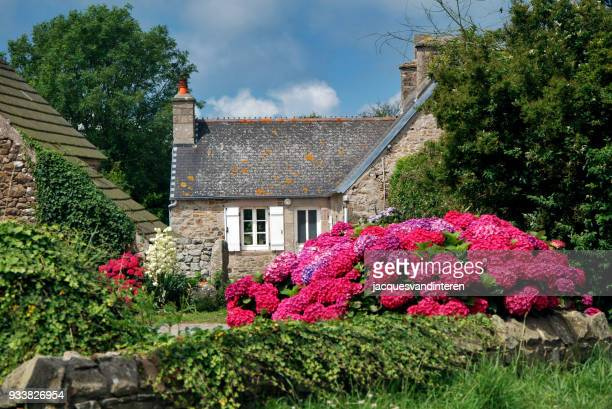 house with rhododendron in normandy, france - azalea stock pictures, royalty-free photos & images