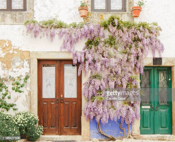 house with wall covered in wisteria and wood door - glycine photos et images de collection