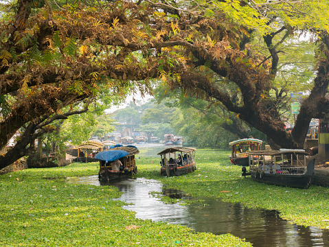 Houseboats on the backwaters of Kerala in Alappuzha (Alleppey) 1017900834