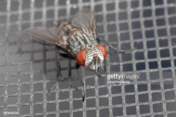 housefly on window screen - housefly stock pictures, royalty-free photos & images