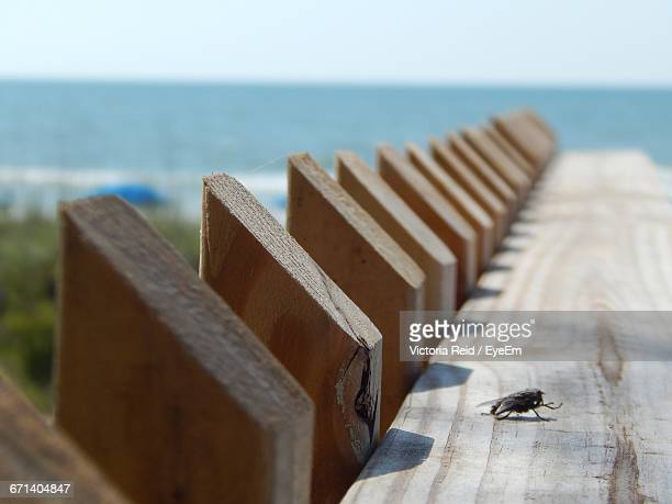 housefly on wooden fence against sea during sunny day - reid,_wisconsin stock pictures, royalty-free photos & images