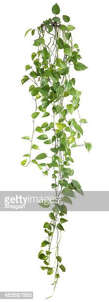 houseplant - houseplant stock pictures, royalty-free photos & images