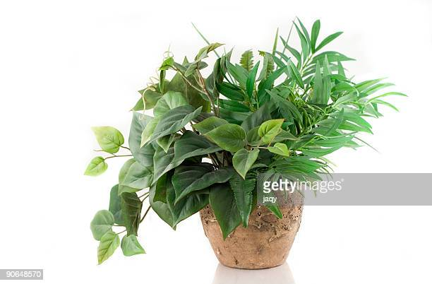 houseplant - artificial stock pictures, royalty-free photos & images