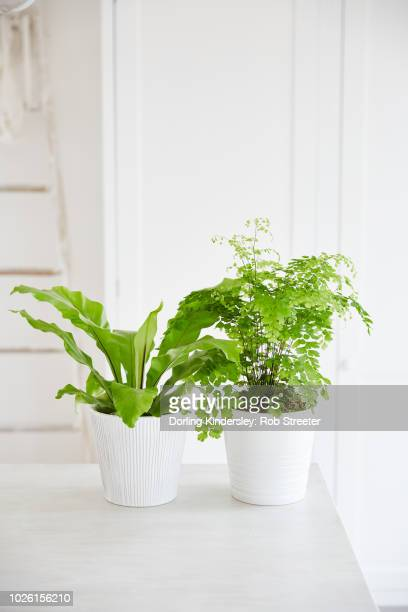 Houseplants in different textures