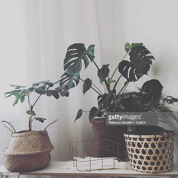 Houseplants On Table Against Curtain At Home
