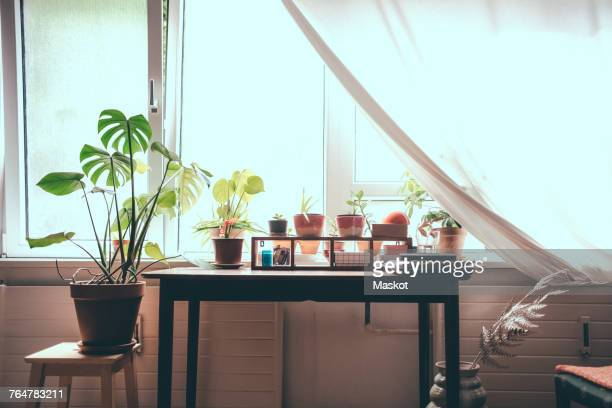 Houseplants on table by window at home