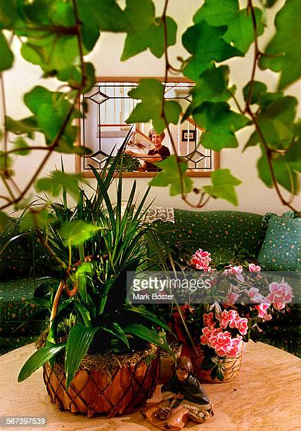LSHouseplantsIvy091797MB–––Marceil McDaniel of Orange incorporates house plants into the decor wherever she can Ivy cascades over shelves and mantles...