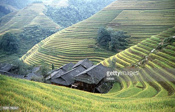 Houses embedded in rice fields