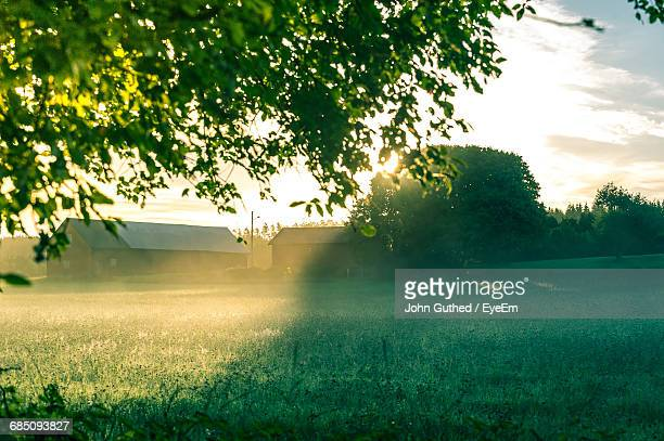 Houses On Field At Morning