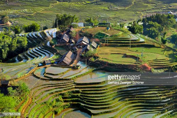 houses, rice farmers, green rice terraces, rice paddies in sapa or sa pa, lao cai province, northern vietnam, vietnam, southeast asia - sa pa stock photos and pictures