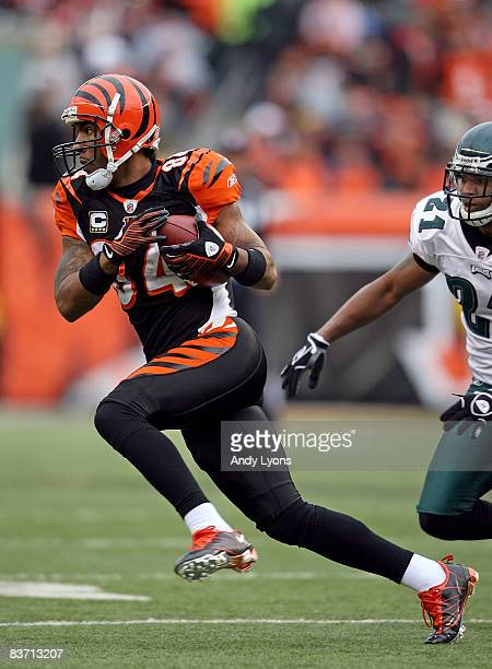 J Houshmandzadeh of the Cincinnati Bengals catches a pass during the NFL game against the Philadelphia Eagles at Paul Brown Stadium on November 16...