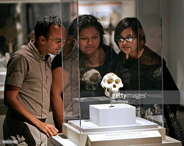 Houston Museum of Natural Science employees from left Jeff Luna Vanessa Garcia and Becky Gutierrez view a replica of the skull of Lucy the 32...