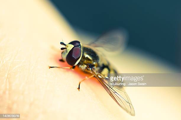 hoverfly - s0ulsurfing stock pictures, royalty-free photos & images
