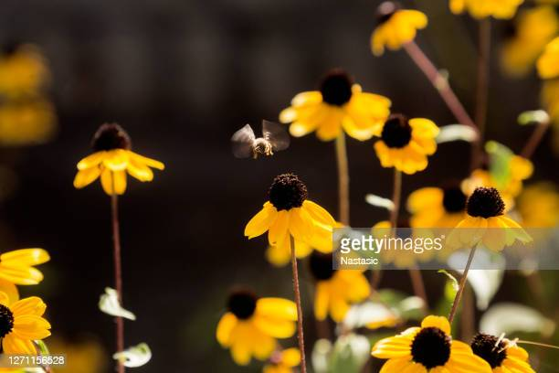 hovering bee in flower field - one animal stock pictures, royalty-free photos & images