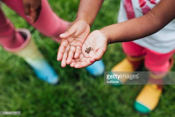 how cute! - frog stock pictures, royalty-free photos & images