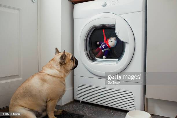how did he get in there? - washing machine stock pictures, royalty-free photos & images
