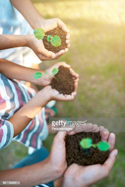 how does your garden grow? - sapling stock photos and pictures