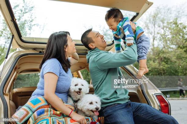 how to travel with baby and dogs - car insurance stock pictures, royalty-free photos & images