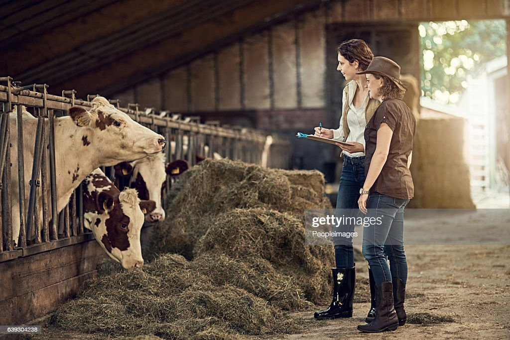 How would you rate the quality of your hay today? : Stock Photo