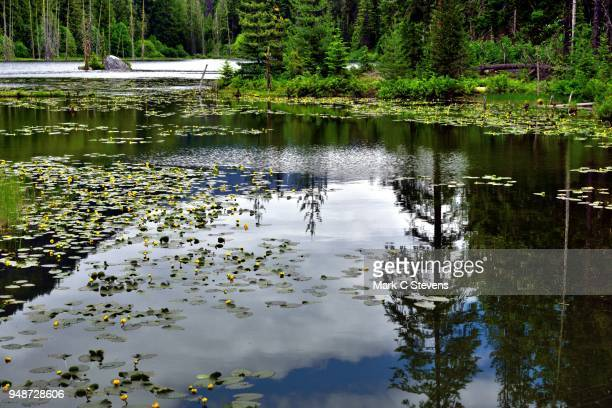 howard lake and water reflections - pacific crest trail stock pictures, royalty-free photos & images