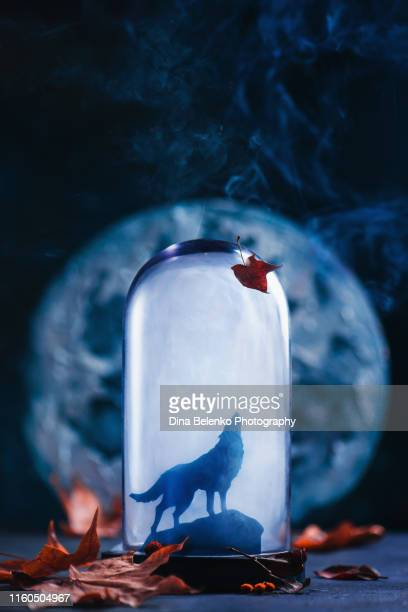 howling wolf silhouette in a glass dome. the moon on a background. creative still life photography with copy space - wolf moon stock photos and pictures