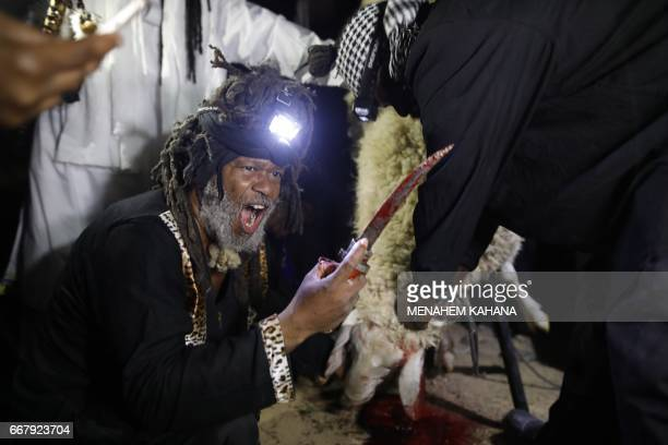 Howshua Amariel leader of the 'Beit Yisrael' sect part of the African Hebrew Israelite Nation of Jerusalem preforms a prayer after the slaughter of a...