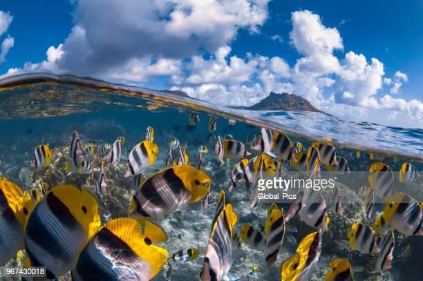 isla de huahine - polinesia francesa - polinesia francesa fotografías e imágenes de stock