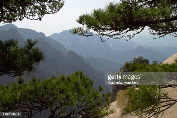 huangshan's iconic view: twisted pines on granite rocks - argenberg imagens e fotografias de stock