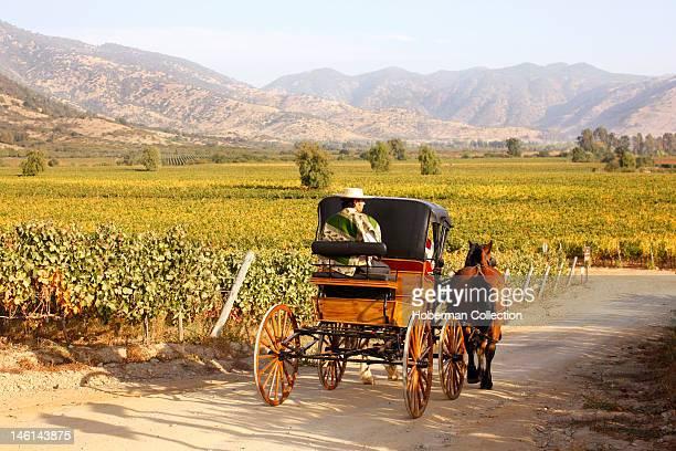 Huaso and Horse Cart Chile Winelands