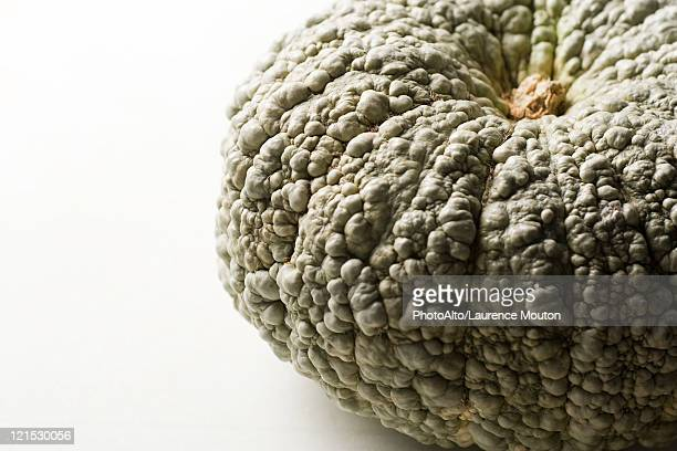 Hubbard squash, cropped