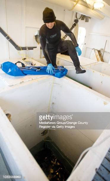 HubbsSeaWorld research assistant Samantha Churchill climbs inside the fishing well of the Millie G in Oceanside to help lift out several 35to40inch...