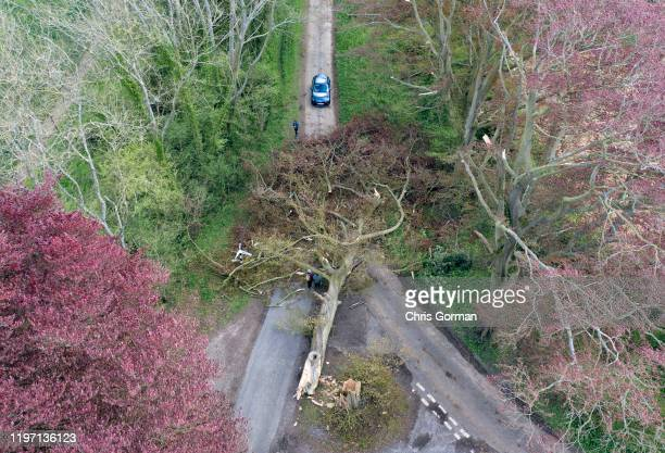 A huge 50 metre Beech tree blocks a junction after being blown over by storm Hannah near Hinton Ampner in Hampshire on April 27 2019 near Bramdean...
