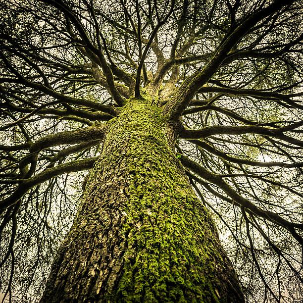 Huge Bare Tree, Creepy Mood Wall Art