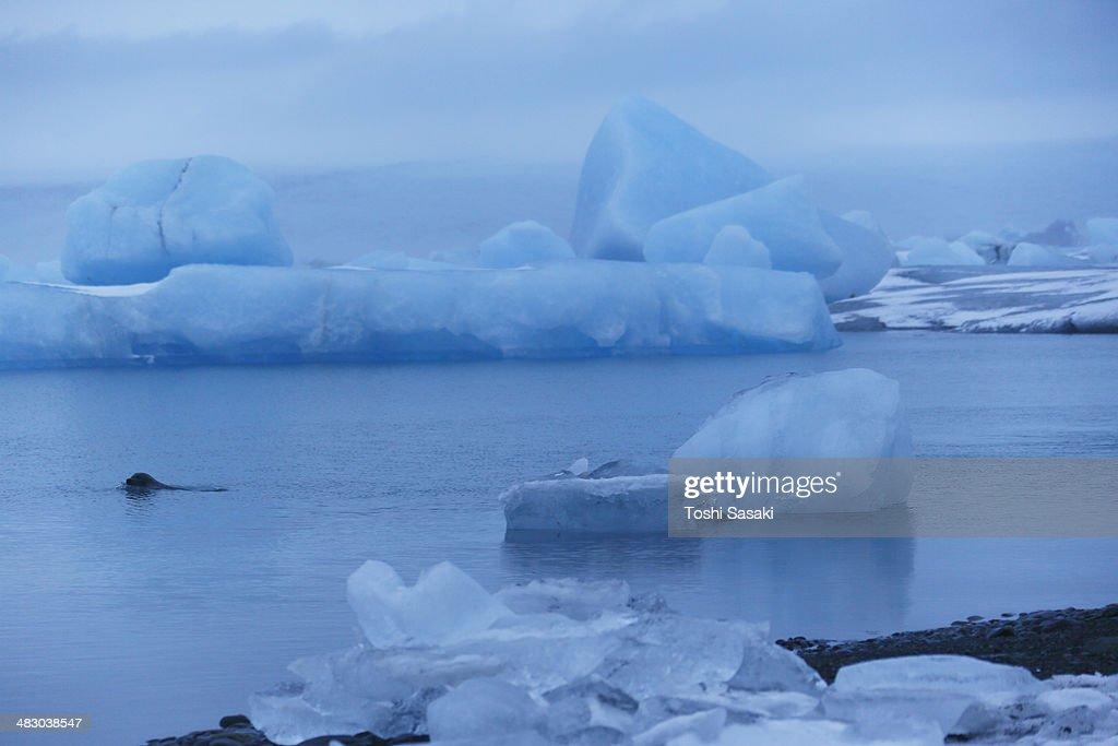 Huge drifting glacier at calm Jokulsarlon, Iceland : Stock Photo