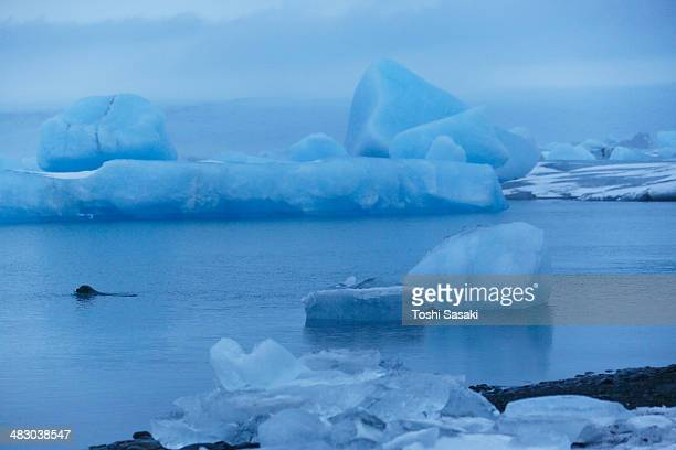 huge drifting glacier at calm jokulsarlon, iceland - glacier lagoon stock photos and pictures