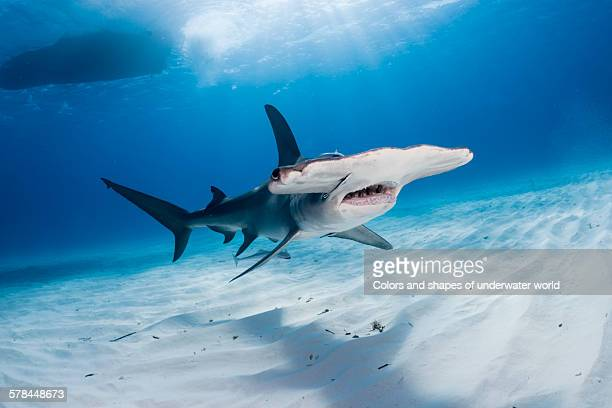 huge - south bimini stock photos and pictures