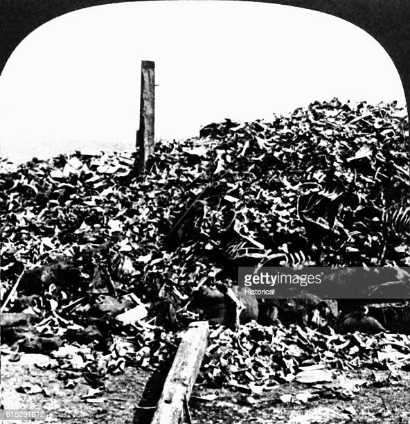 A huge pile of human bones collected after the Battle of Verdun 1916