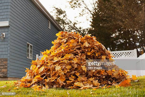 a huge pile of raked fallen autumn leaves in a yard. - heap stock pictures, royalty-free photos & images