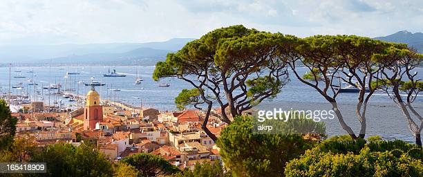 Huge Pine Trees above St. Tropez at the Cote D'Azur