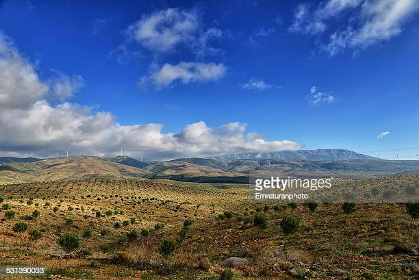 huge plantation of olive trees - emreturanphoto stock pictures, royalty-free photos & images