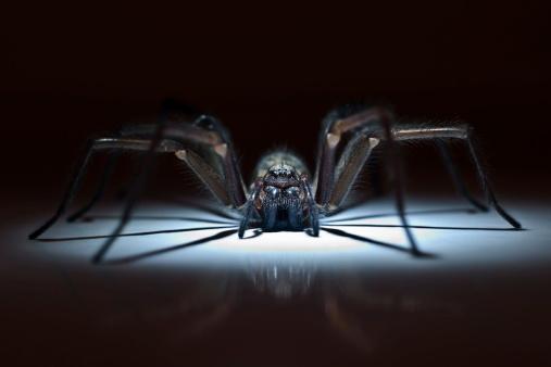 huge spider in ambush 495470667