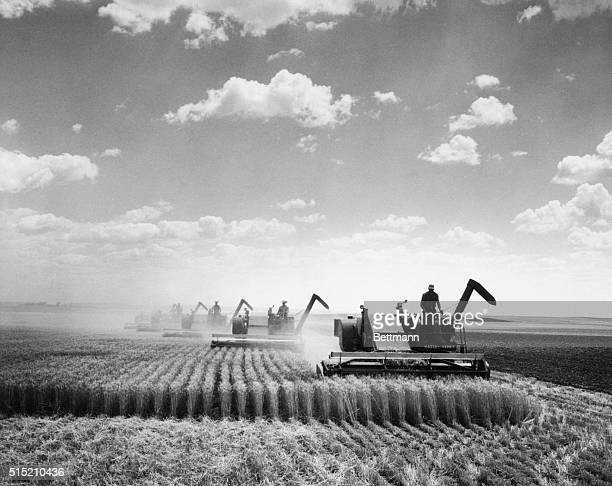 Huge threshing machines cut their way across a field of grain in the Midwest
