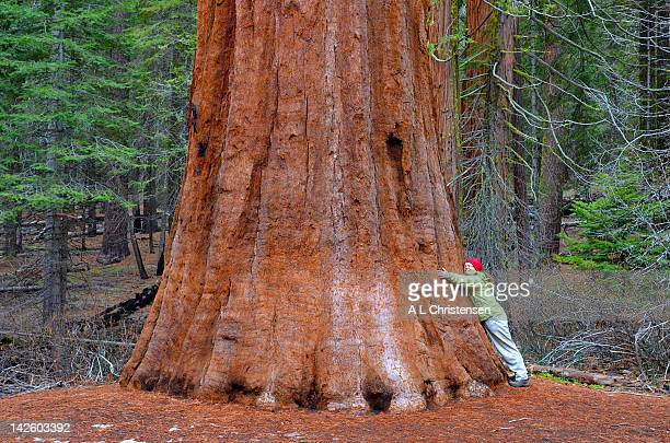 Hugging sequoia tree
