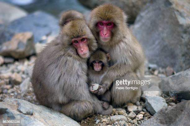 Hugging snow monkeys at Jigokudani Snow Monkey Park