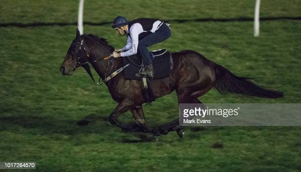 Hugh Bowman on Winx gallops during a trackwork session at Rosehill Gardens on August 16 2018 in Sydney Australia Winx the world's highest rated...
