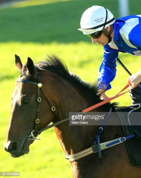 Hugh Bowman on Winx heads out of the mounting yard before a barrier trial at Rosehill Gardens on February 5 2018 in Sydney Australia