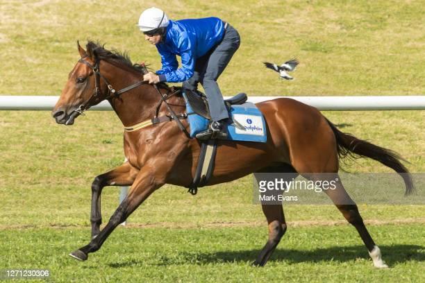 Hugh Bowman riding Bivouac wins heat 3 during barrier trials at Royal Randwick Racecourse on September 08, 2020 in Sydney, Australia.