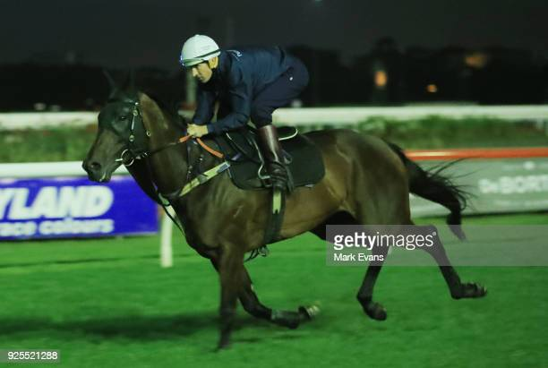 Hugh Bowman riding Winx competes in pre dawn trackwork session at Rosehill Gardens on March 1 2018 in Sydney Australia