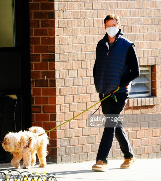 Hugh Jackman walks dogs on April 15, 2020 in New York City.